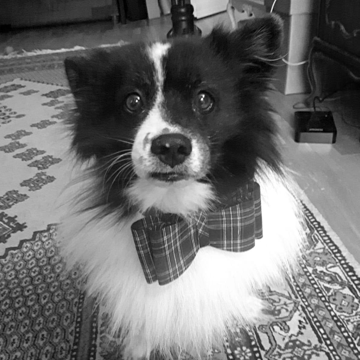 Profilbild von Micky